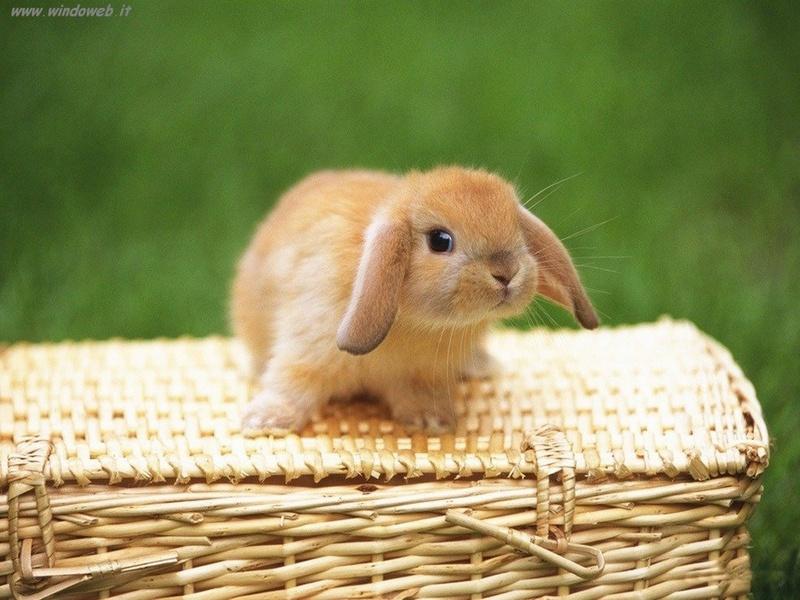 Foto animali 335 sfondi desktop sfondi gratis da scaricare for Foto desktop animali