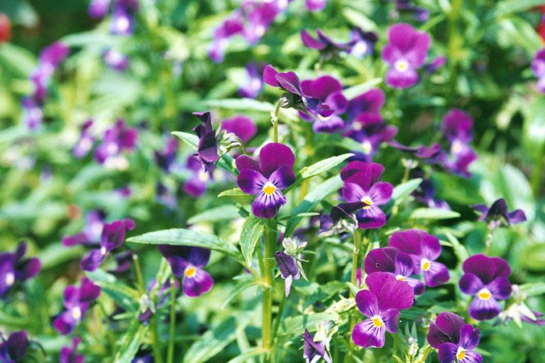Fiori 17 sfondi desktop sfondi gratis da scaricare for Sfondi desktop fiori