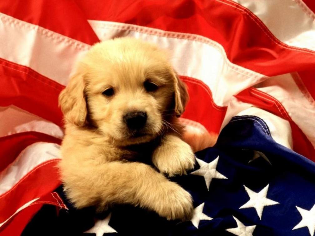 Sfondi desktop gratis cuccioli di animali